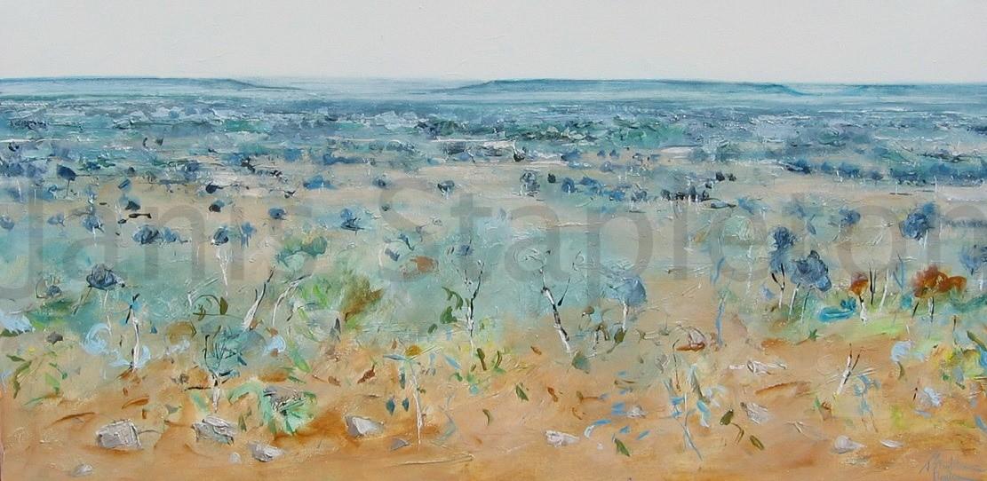 Acacia Kimberley