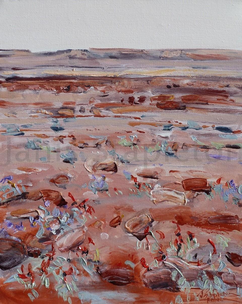 Pilbara Desert Pea