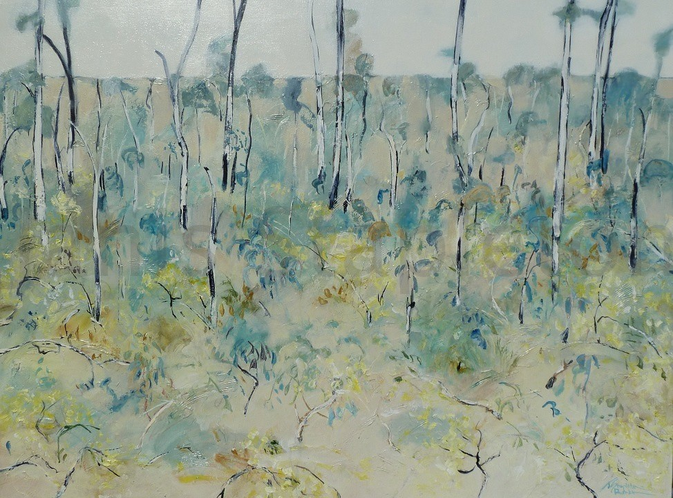 Blue Gums and Wattle